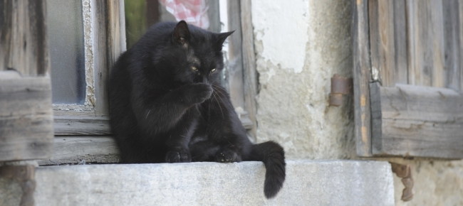 Impegno Per I Gatti Senzatetto Laregione